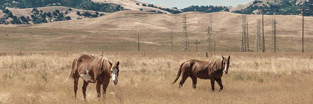 Farm & Ranch Insurance header image