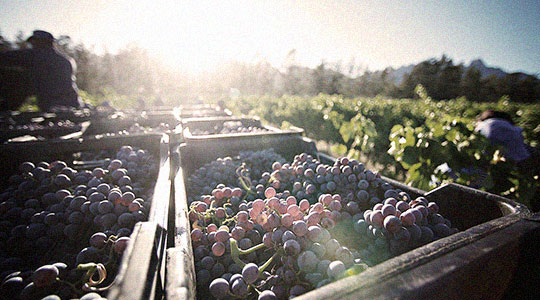 Click here for winery-related inquiries